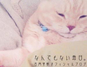 吉岡里帆の飼っている猫