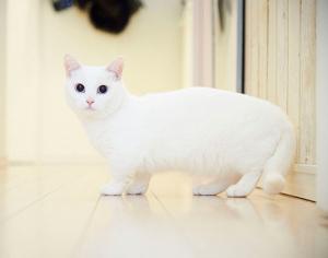 鈴木えみが飼っている猫「ダニョ」